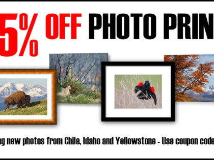 2017 Mid-Summer Sale: Discounted Photo Prints and More