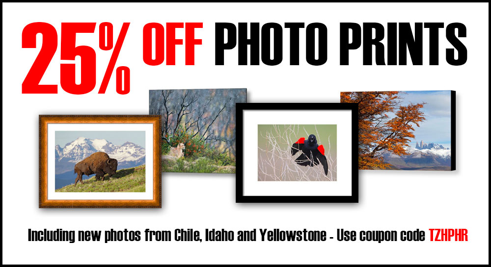 2017 Summer Sale: Save 25% on Photo Prints