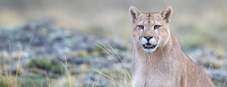 Patagonia 2017 Pumas photos