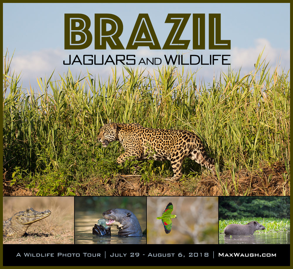 2018 Brazil Wildlife Photo Tour