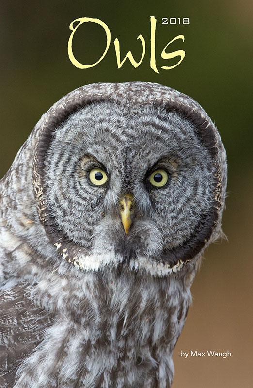 2018 owls calendar cover