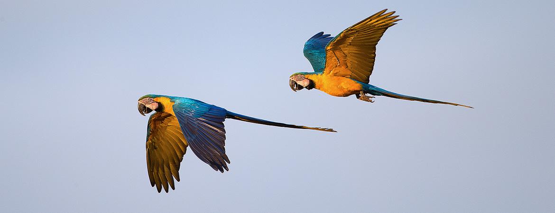 New Photos: Brazil 2017 Birds