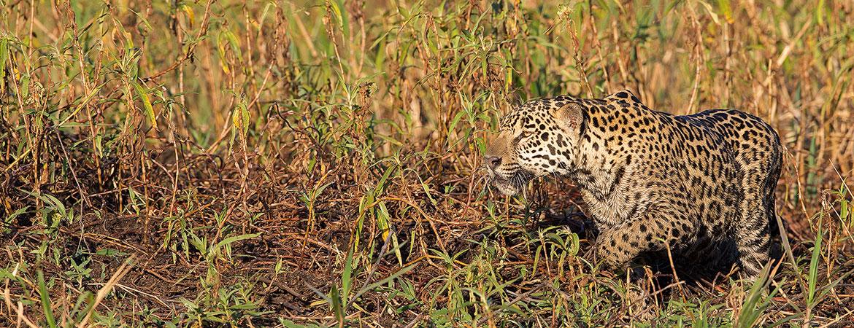 Brazil 2017 Wildlife & Scenery Photos