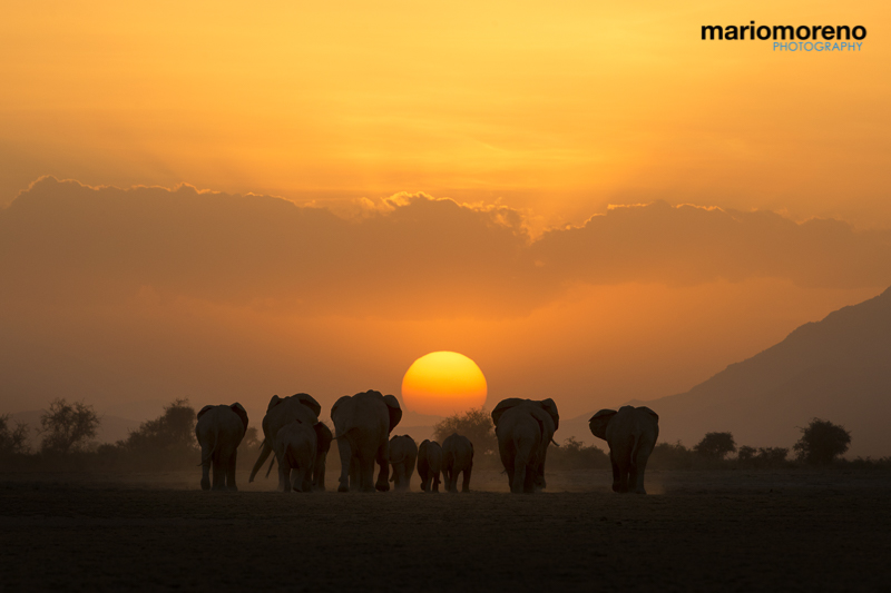 Amboseli Sunset by Mario Moreno