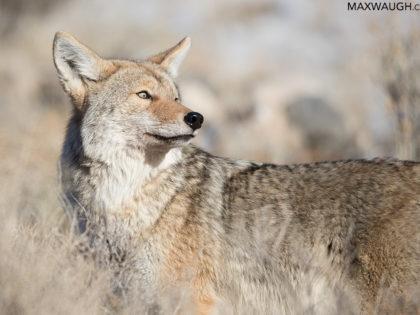 Yellowstone Winter 2018 Trip Report: Days 0 & 1