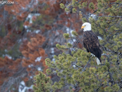 Yellowstone Winter 2018 Trip Report: Days 11 – 14