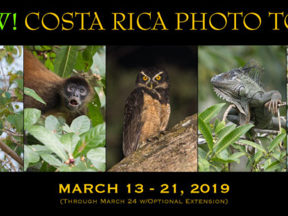 Just Added: 2019 Costa Rica Photo Tour