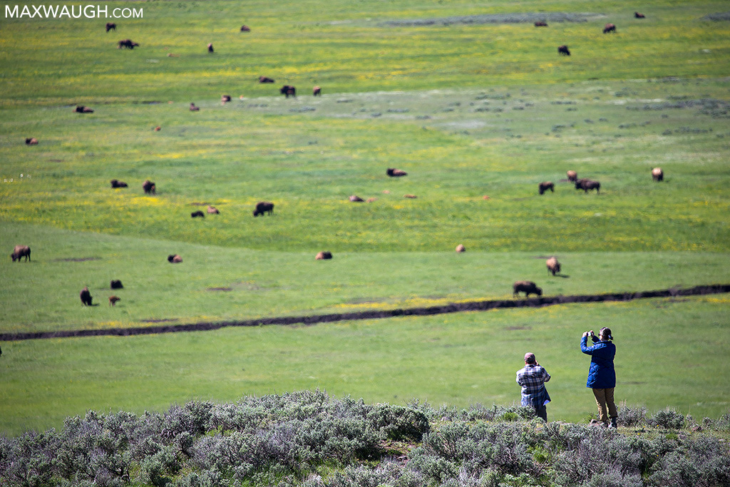 Tourists in Lamar Valley