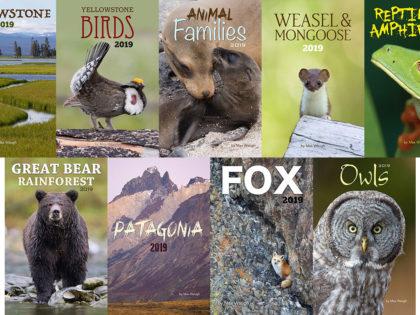 2019 Nature & Wildlife Calendars