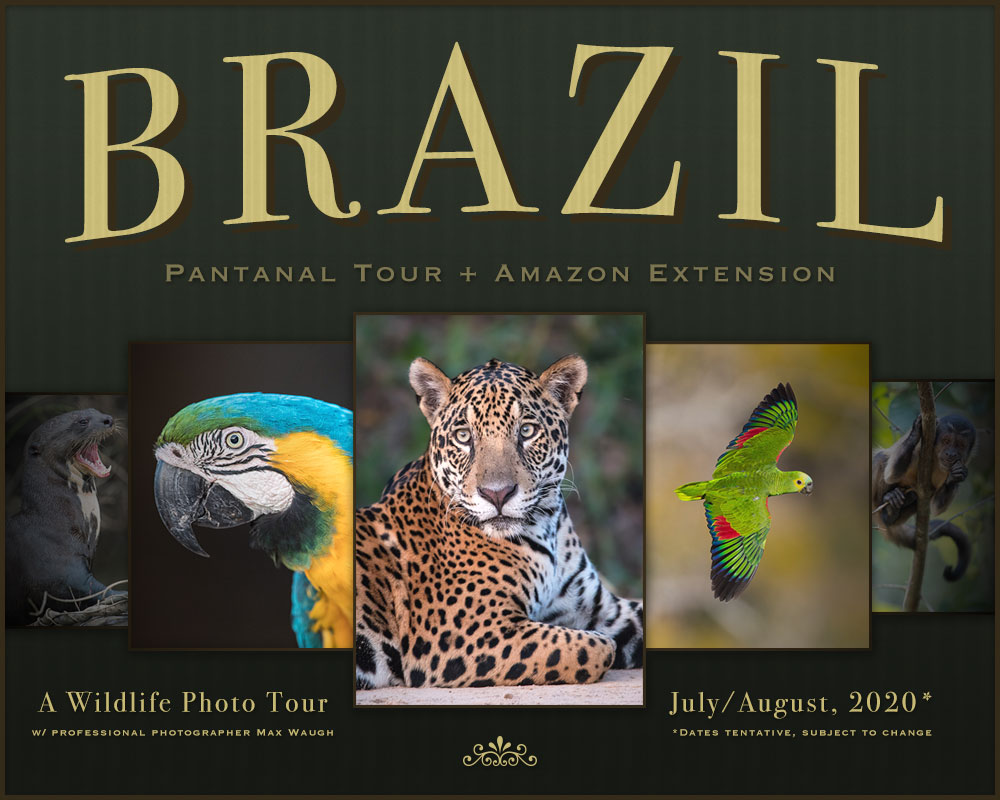 2020 Brazil Wildlife Photo Tour