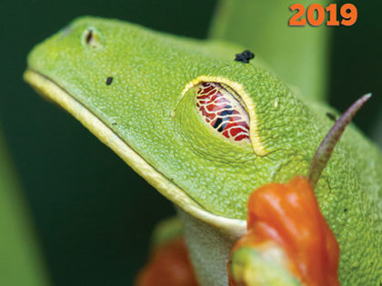 2019 Reptiles & Amphibians Calendar