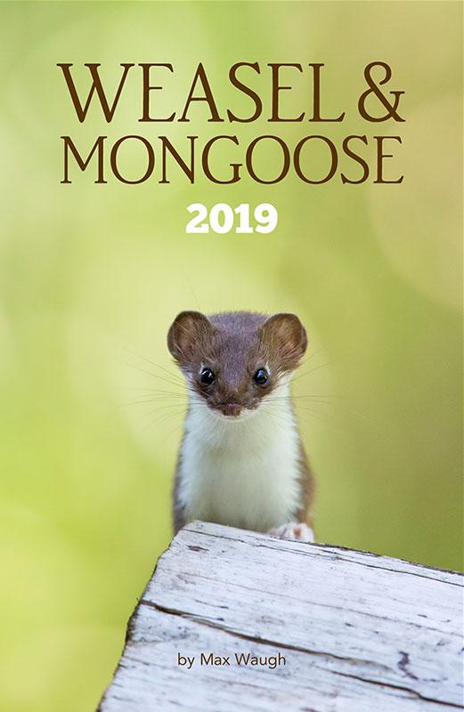 2019 Weasel & Mongoose Calendar