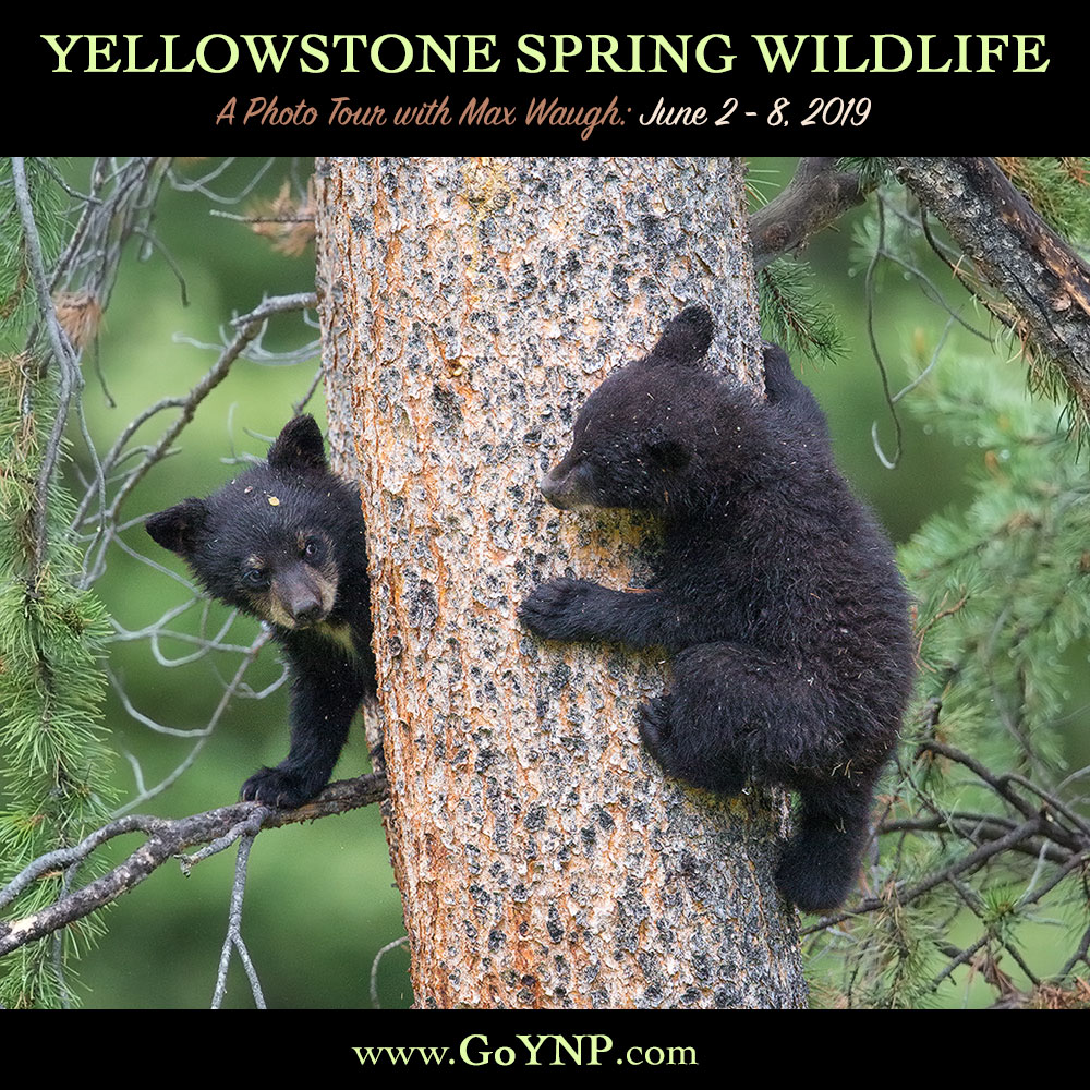 Yellowstone Spring 2019 photo tour