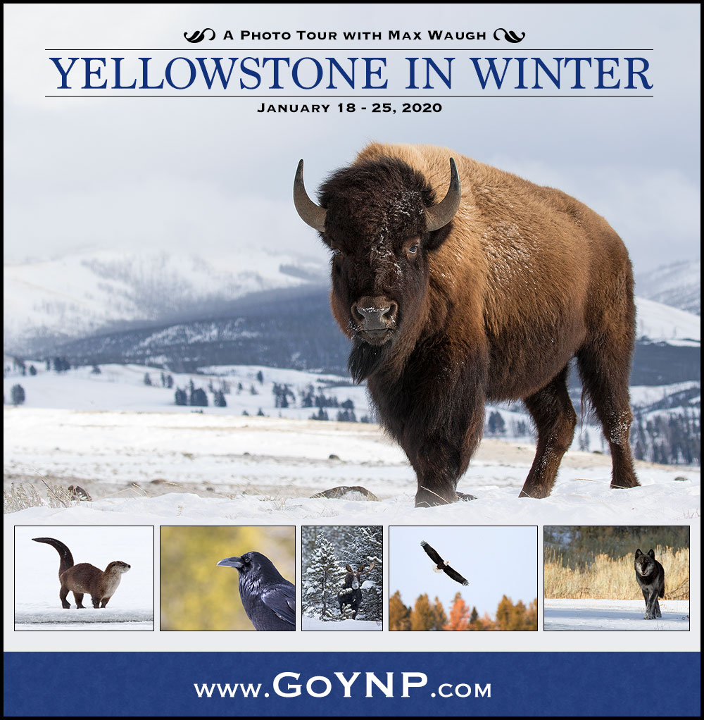 Yellowstone Winter 2020 Photo Tour
