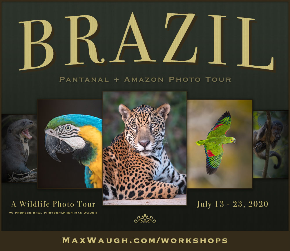 Brazil 2020 Photo Tour