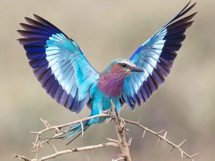 New Photos: Tanzania 2019 Birds