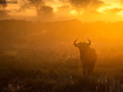 New Photos: Tanzania 2019 Wildlife & Scenery