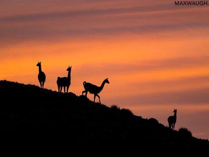 New Photos: Patagonia 2019 Wildlife & Scenery