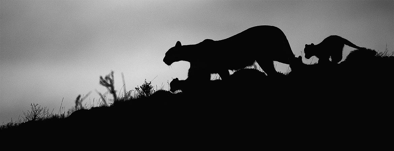 Patagonia 2019 Puma photos