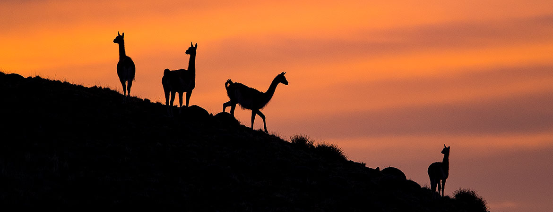 Patagonia 2019 Wildlife & Scenery Photos
