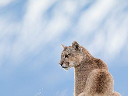 New Photos: Patagonia 2019 Pumas