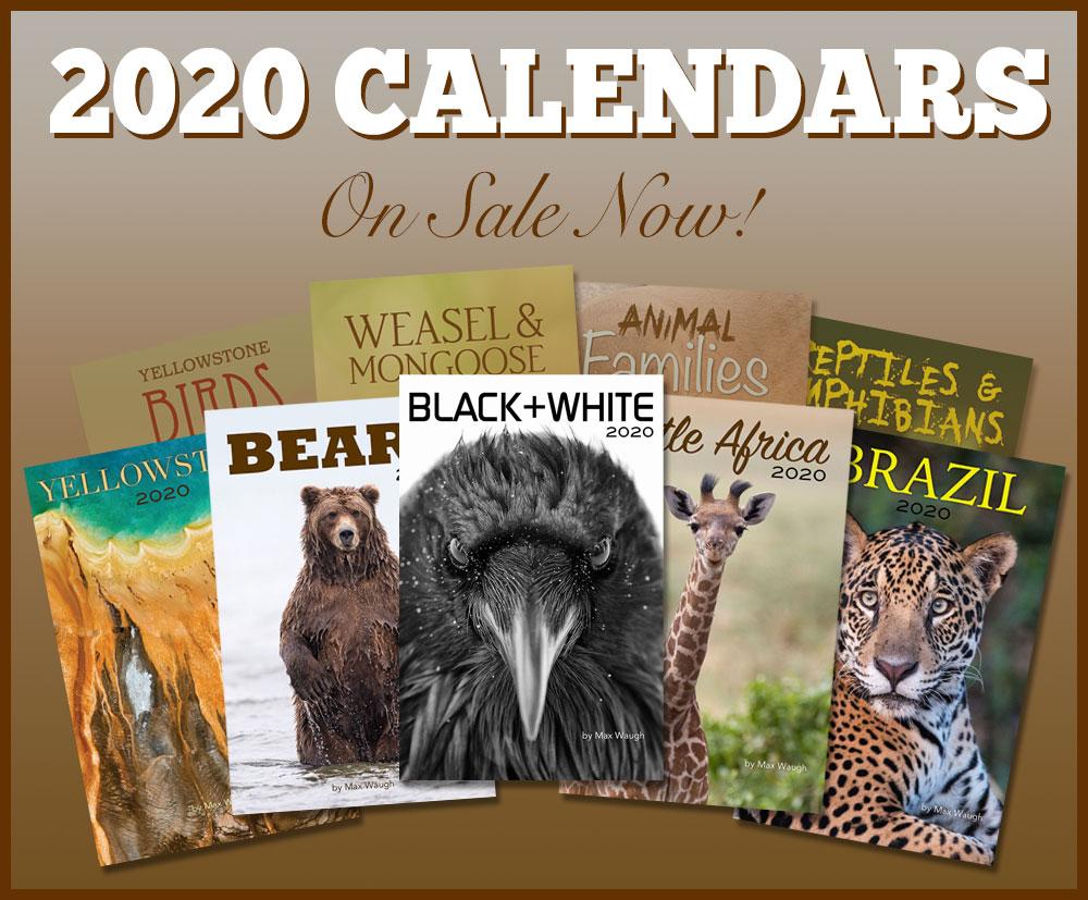 2020 Nature and Wildlife Calendars