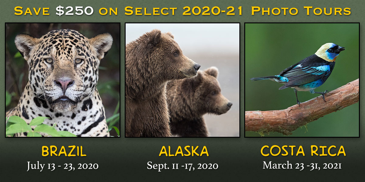 Save $250 on 2020-21 Photo Tours