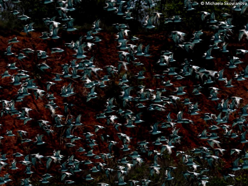 Yawuru Country, Broome, Western Australia Wildlife - by Michaela Skovranova