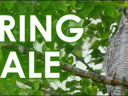 2020 Spring Sale: Discounts on Prints, New Calendars, and More