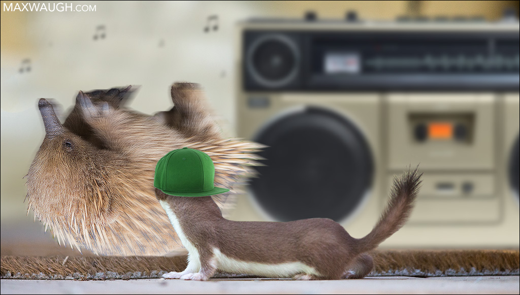 Echidna and Weasel having a dance party