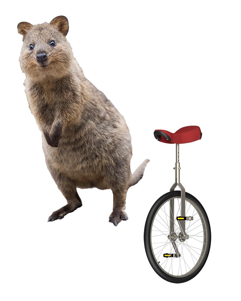 Quokka and Unicycle