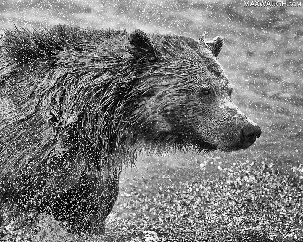Grizzly Bear Spray