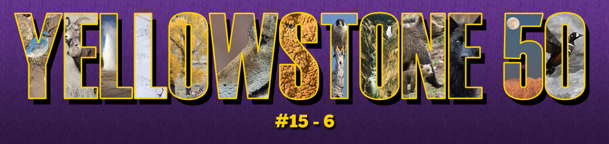 Ranking Fifty Yellowstone Trips