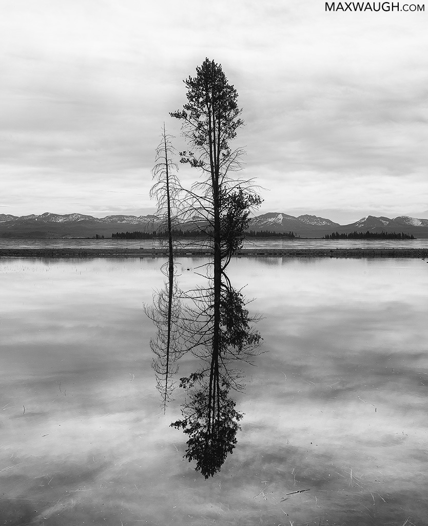 Yellowstone Lake and tree reflection