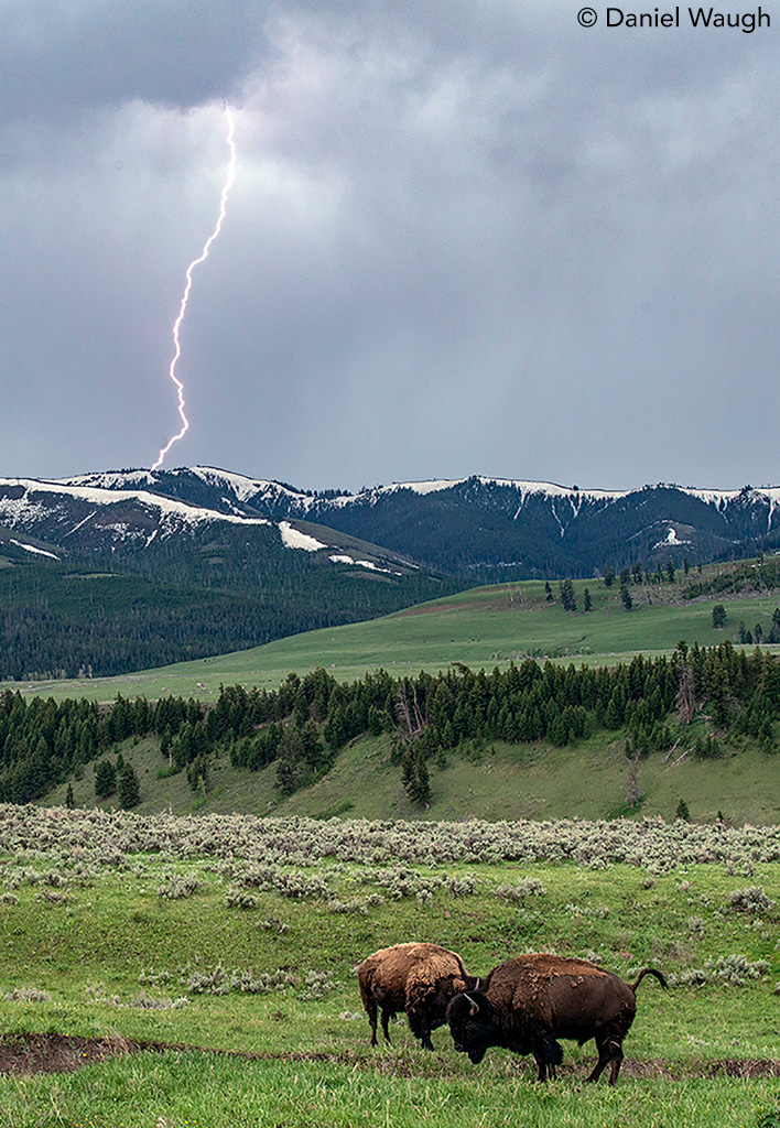 Lightning and Bison by Dan Waugh