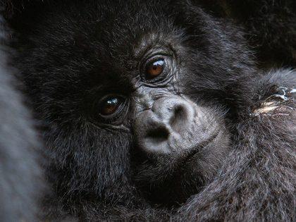 Photos Added: Rwanda 2007 Nature & Wildlife