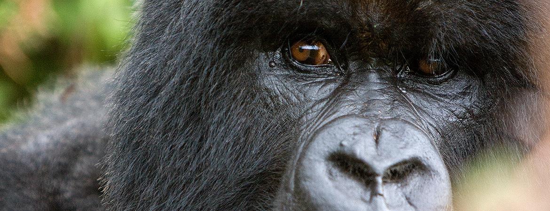 Rwanda 2007 Nature & Wildlife