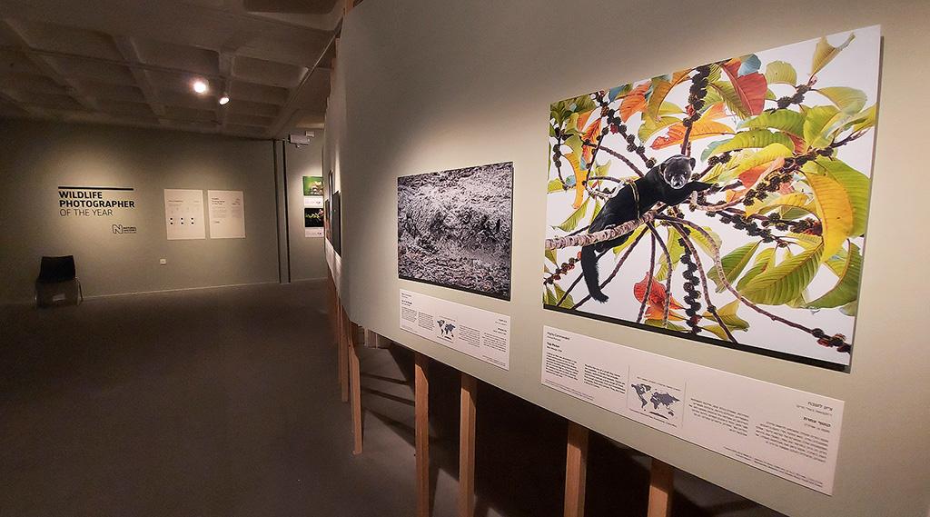 WPY56 Exhibit in Israel (photo by Ariel Fields)