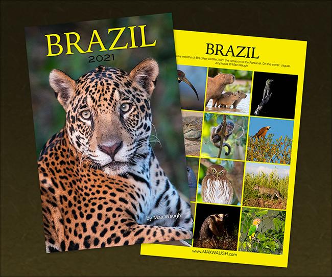 2021 Brazil Calendar