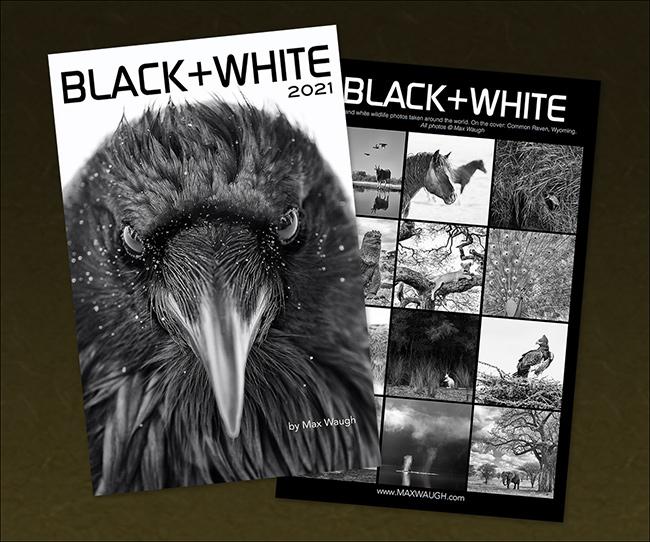 2021 Black and White Calendar