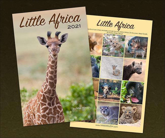 2021 Little Africa Calendar