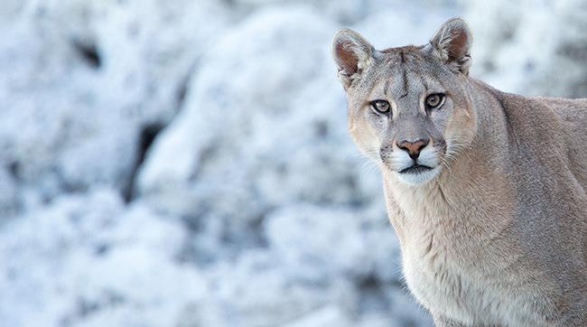 2021 Pumas of Patagonia Tour