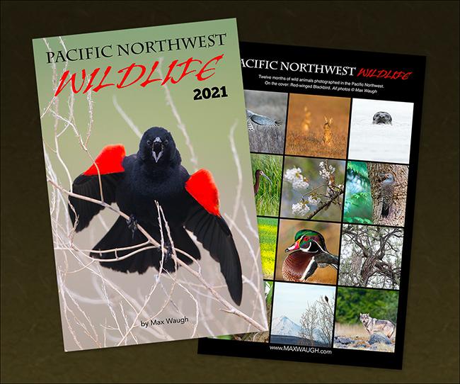 2021 PNW Wildlife Calendar