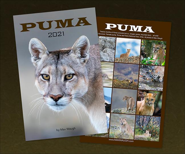 2021 Pumas Calendar