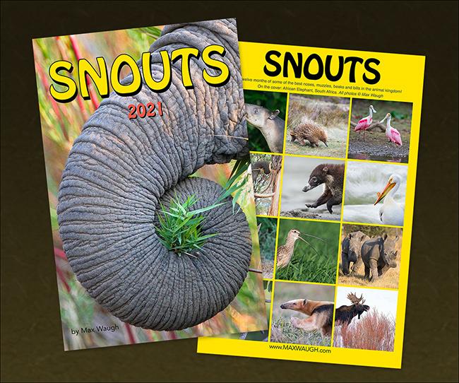 2021 Animal Snouts Calendar