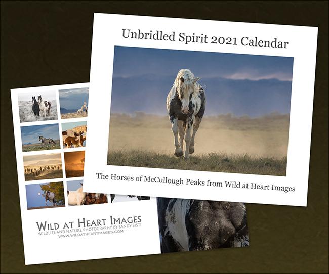 2021 Unbridled Spirit Calendar by Sandy Sisti