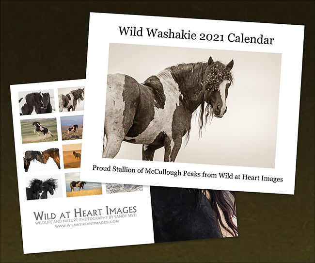 2021 Washakie Calendar by Sandy Sisti