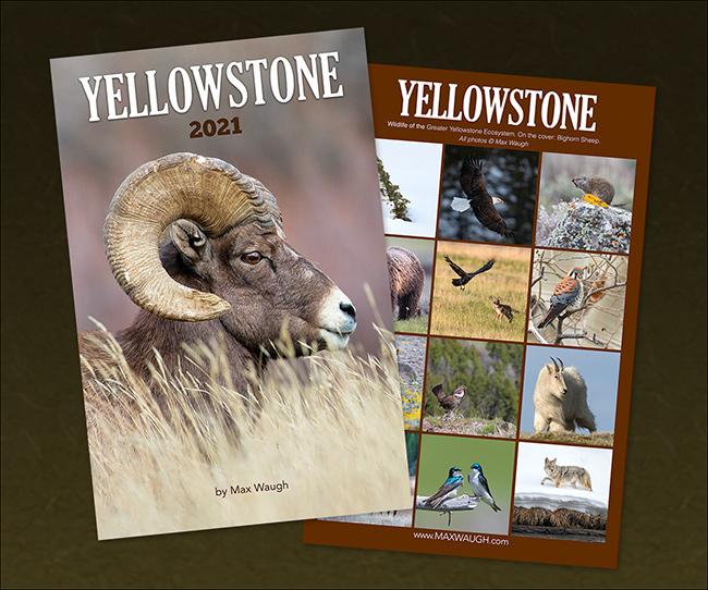 2021 Yellowstone Calendar