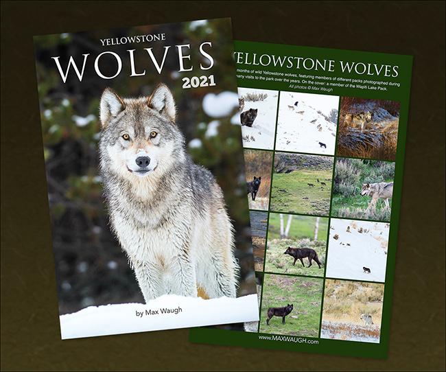 2021 Yellowstone Wolves Calendar