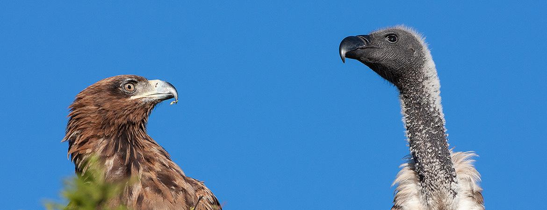 Tanzania 2007 Bird Photos